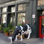 Les meilleures adresses pour bruncher à New-York